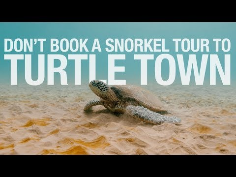 MAUI - DON'T BOOK A SNORKEL TOUR To Turtle Town