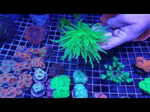 Aquarium FISH & CORALS STORE Tour Of Aqua-Life