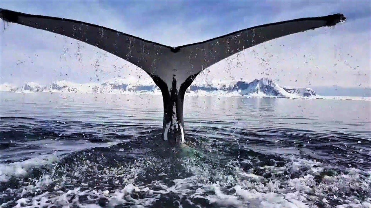 【動画】間近でクジラを観察