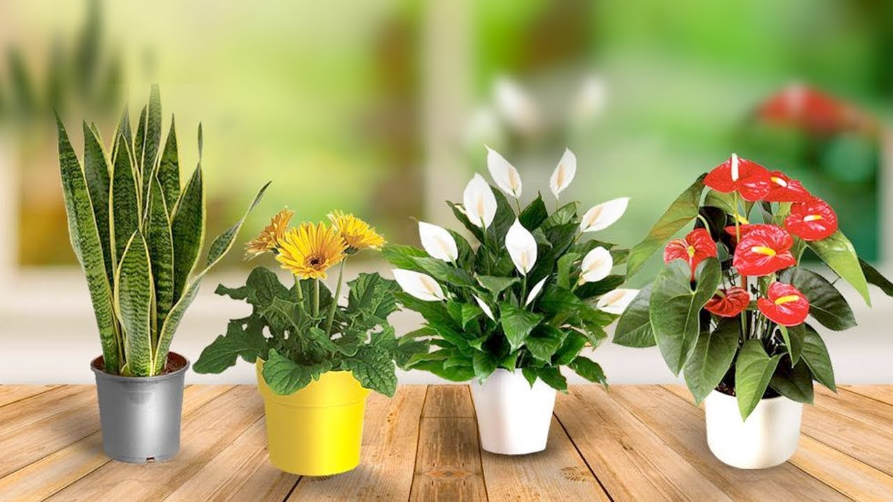 NASA Verified Indoor Plants for Improving Air Quality on
