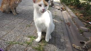 i took care of street kitten watch how become in 2 months