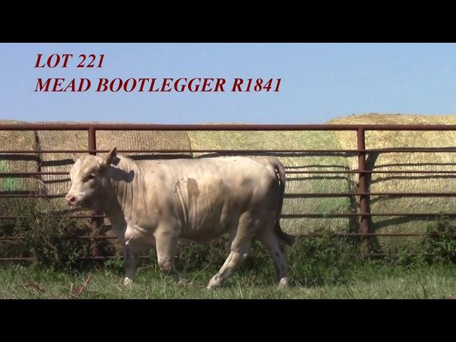 Mead Angus Lot 221