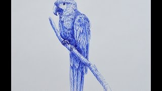 How to Draw a Macaw With Fountain Pen - Lamy Safari - Stylo