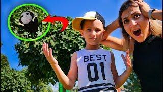 Обезьянка Хулиганка Преследует Нас Что Ей Нужно? Funny Video For Kids On Didika Tv