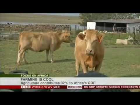 BBC Africa - Farming is cool