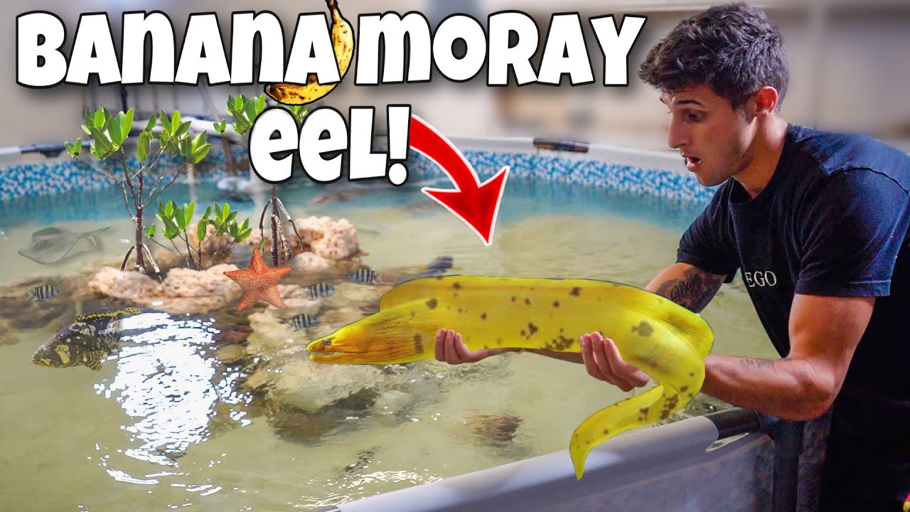 Transferring The RAREST EEL into My Saltwater POND + More!!