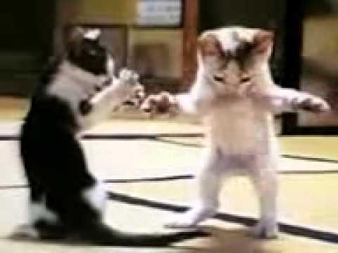 رقص للقطط مضحك جدددددددددددددددددددددددد ا