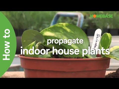 how-to-propagate-indoor-house-plants- -indoor-plants- -homebase
