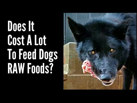Is It Expensive To Feed Your Dog RAW Foods?
