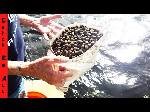 Dog Food Pellet Fishing