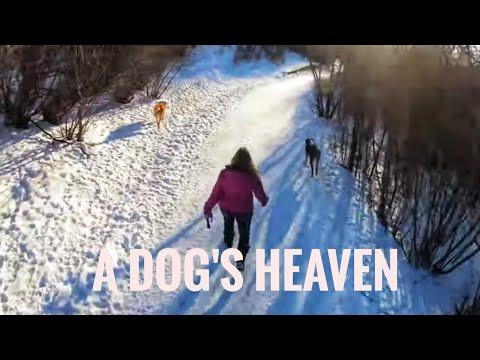 TJV - A DOG PARK HEAVEN - #1609