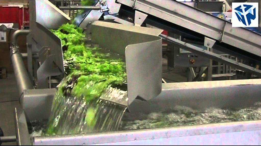 salad processing line by ftnon youtube