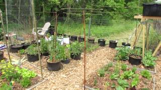My Community Garden Plot Episode 5: Fencing, Trellising, Determinate Tomatoes & A Hose Tip -trg 2015