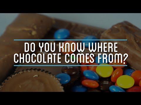 Δείτε πως φτιάχνεται η σοκολάτα: Από το φρούτο μέχρι την τελική μορφή της!