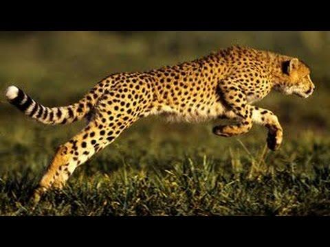 National Geographic Predators Animal at War African Wildlife Full Documentary