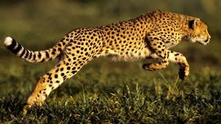 National Geographic Predators Animal at War African Wildlife Full Documentary