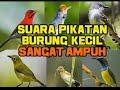 Suara Pikat Burung Kecil Ramai  Mp3 - Mp4 Download