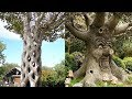 35 Amazing Trees You Won't Believe Actually Exist
