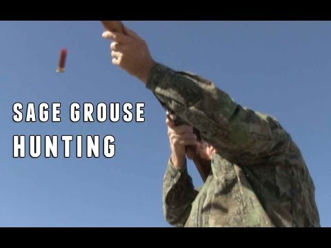 Utah Sage Grouse Hunting