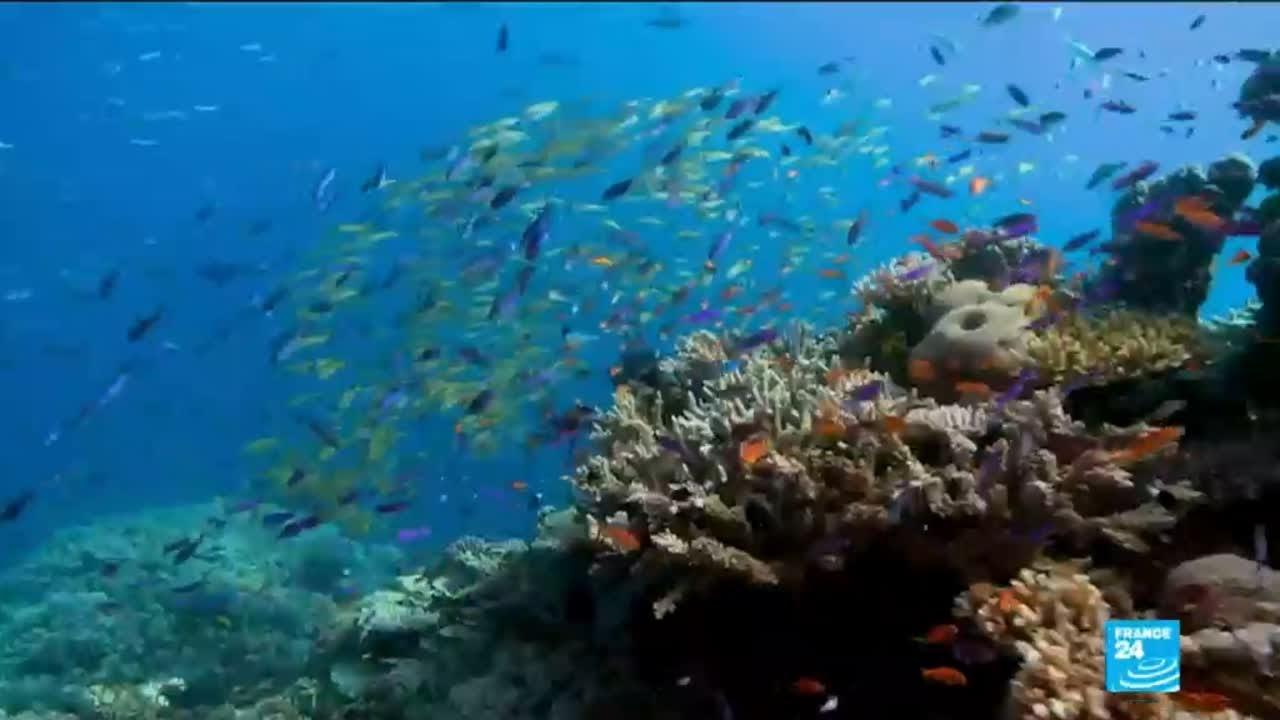 فرانس 24:Environment: Great Barrier Reef irreversibly damaged by global warming, 2016 heatwave