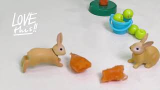 Rabbit's Meal Time!