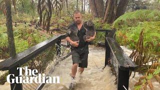 Staff beat back alligators with broom as Australian Reptile Park floods