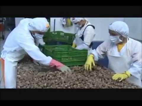 Elaboracion de harina de maca