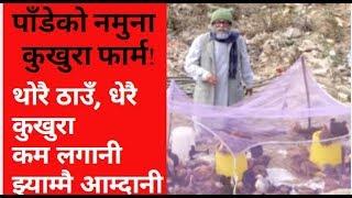 Bhadragol,थोरै ठाउँ, धेरै कुखुरा कम लगानी  झ्याम्मै आम्दानी ! भद्रगोल पाँडेको नमुना कुखुरा फार्म !!