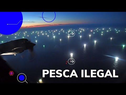 Ciudad de buques pescando al límite del Mar Argentino