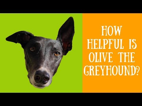 Olive the Helpful Greyhound