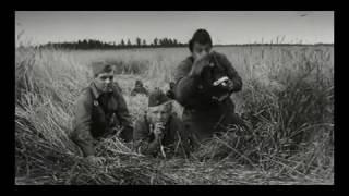Подвиг на Буйничском поле Могилёв