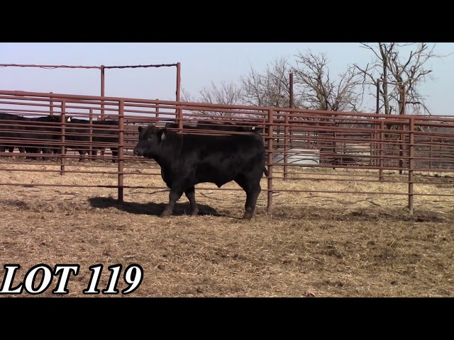 Mead Angus Farms Lot 119