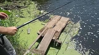 Как ловить плотву Рыбалка на реке Медведица