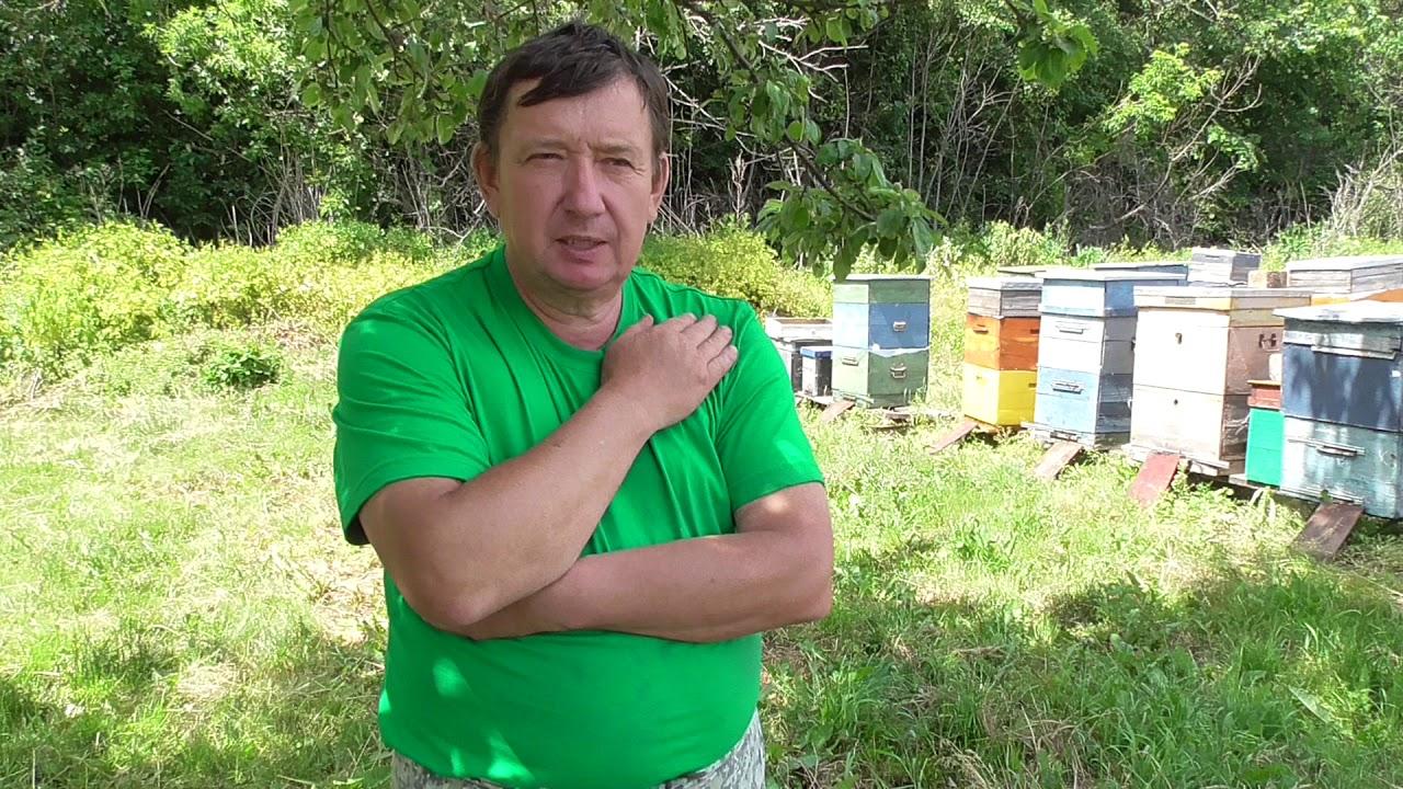 Мёд под Микроскопом: Опыт 3: х100 Клещи Мучные Acarus siro - YouTube