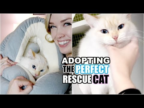 ADOPTING THE PERFECT RESCUE CAT! | From Cat Hoarder To Happy Home!