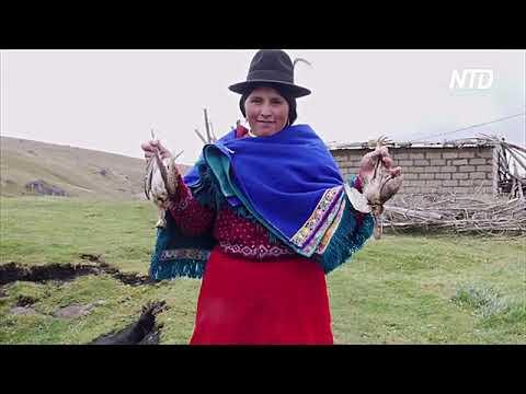 Почему птицы гибнут во время перелёта над Эквадором