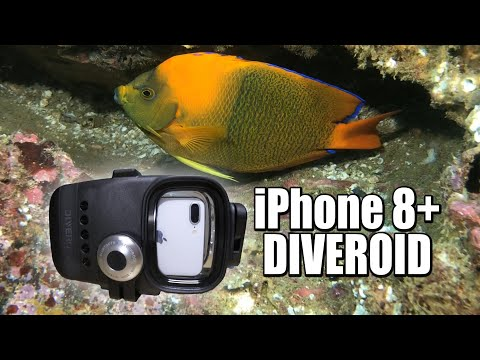 iphone-8+-underwater-with-diveroid