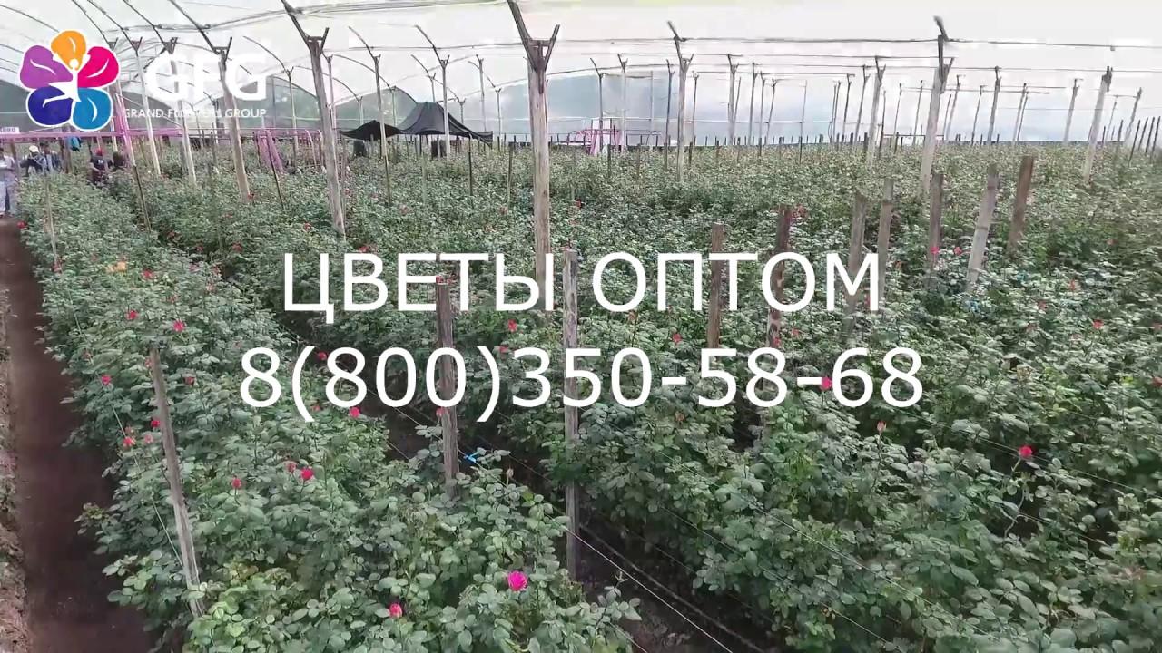 tsveti-optom-v-ekvadore-saratov-dostavka-tsvetov-podarok-moskva