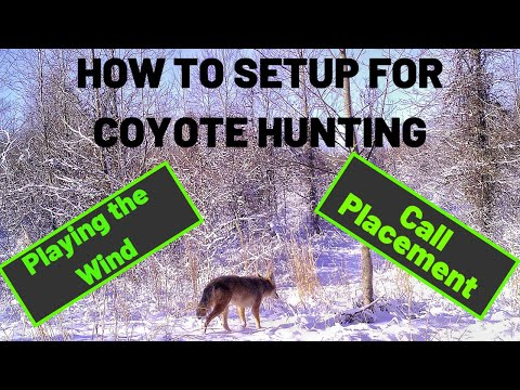 HOW I SETUP FOR COYOTE HUNTING | Tips For Gear, Wind Direction And Call Location