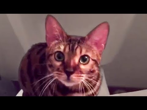 Cute and Funny Cat Videos to Watch While Quarantined!!