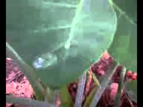 Air di daun talas.3gp