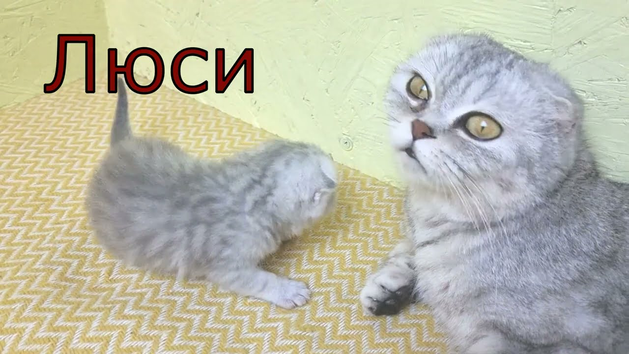 Милые Котята обнимаются и мяукают Выбрали имена котятам