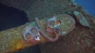 Diving the Nippo Maru - Truk Lagoon - WWII Japanese ship wreck