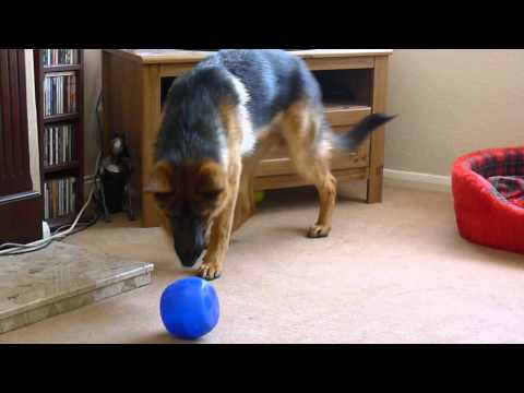 Rosco Demonstrating the Buster Cube