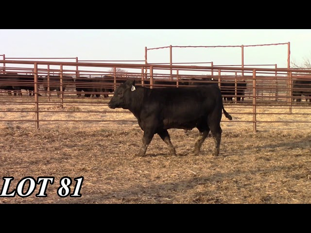 Mead Angus Farms Lot 81