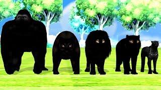 Black Finger family nursery rhymes songs for toddlers,Gorilla,Lion,Tiger,Bear,children,NASH TOON Tv