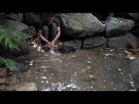 How To Use Poisonous Plants To Catch Fish, Survival In The Tropical Rainforest, Ep 45