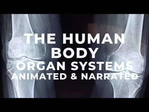 human body systems - youtube, Human Body