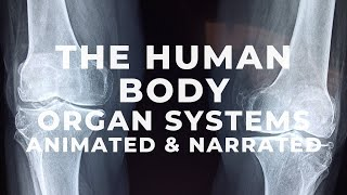 human body parts and functions