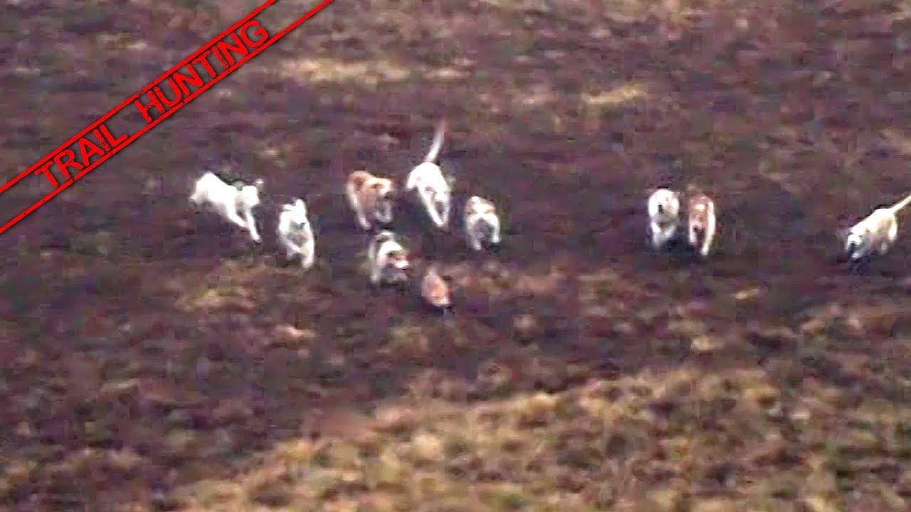 Fox Hunting | League Against Cruel Sports